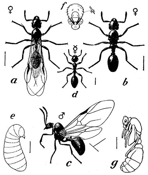 Image Source: Encyclopedia Britannica 11th Ed.