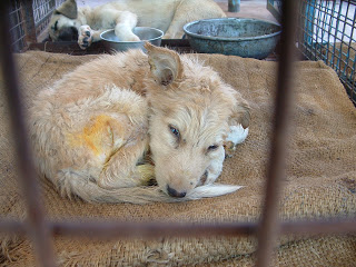 Animal Aid Udaipur April 16, 2010 338 (151)