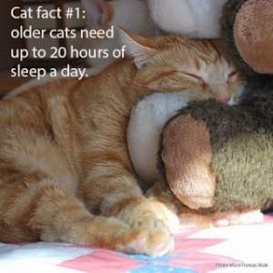 cat-fact-1