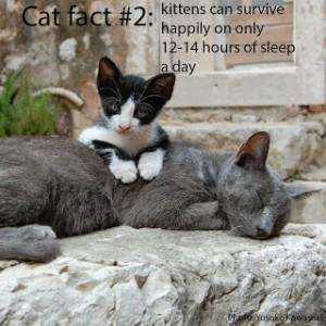 cat-fact-2