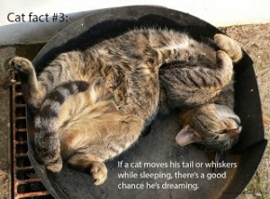 cat-fact-3