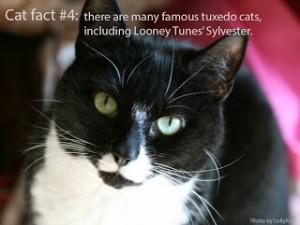 cat-fact-4