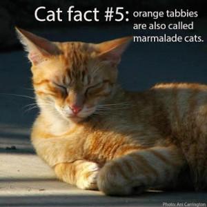 cat-fact-5